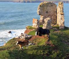 Sea horses (daviddb) Tags: explore pembrokeshire neigh magicdonkey
