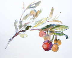 Strawberry Tree. Ultramarine colored pencil and watercolor (suhita1) Tags: plant nature watercolor strawberrytree