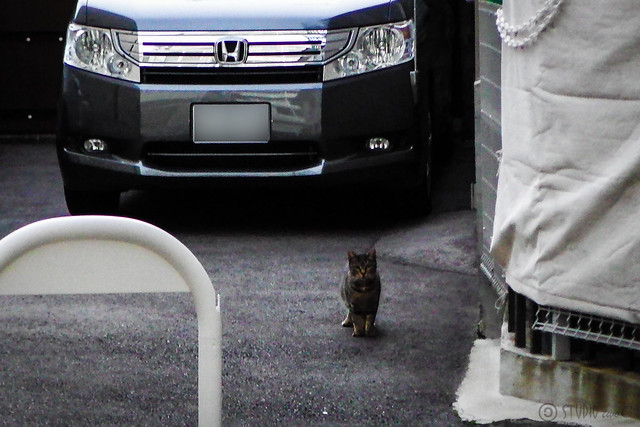Today's Cat@2014-11-28