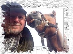 Kiss (gill4kleuren - 12 ml views) Tags: life horse me sarah fun outside happy running gill saar paard haflinger