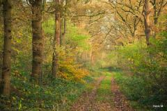 Bij de Plasdijk (Hengelo Henk) Tags: autumn wandelen herfst twente cirkels mander