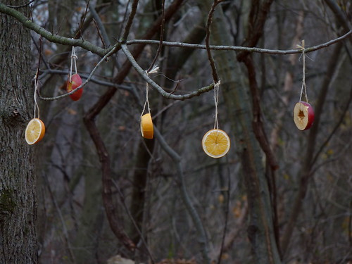 Fruit in the trees