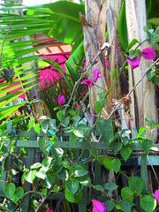 venice hedge