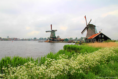 Spring in Zaanse Schans (gráce) Tags: flowers holland mill water netherlands windmill dutch skyline architecture river landscape spring flowering