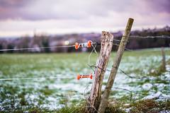 Electric Fence (cerealbawx) Tags: winter snow 50mm belgium belgique bokeh speedmaster belgien f095 zhongyi 095 hergenrath mitakon kelmis lacalamine