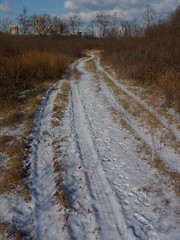 Trail through the meadow (Dendroica cerulea) Tags: winter snow newjersey nj meadow footprints trail highlandpark middlesexcounty ayresbeach redsmarina