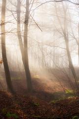 Magical Woodland Light (jactoll) Tags: light mist misty landscape woods nikon mood cotswolds gloucestershire snowshill d610 jactoll nikonfxshowcase
