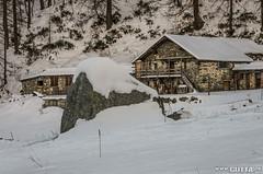 Snow (DavidGutta) Tags: sky snow ski ice alberi montagne valle natura neve sole albero natale montagna sci aosta piste nevicata ghiaccio fiumi innevato torrenti crevacol