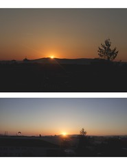 sunrise (ConcreteLies) Tags: light orange sun tree sunrise landscape outside outdoors diptych