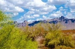 Desert Textures (hecticskeptic) Tags: arizona birds spring woodpecker squirrel hummingbird desert cardinal nogales birding az deer hummingbirds morgan californiadesert maderacanyon arizonadesert southernarizona mexicanjay eleganttrogon lakepatagonia markmorgan markamorgan