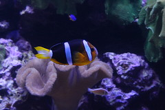Tropical Fish (Chi-Hung Lin) Tags: museum taiwan  corals   2016 pingtung