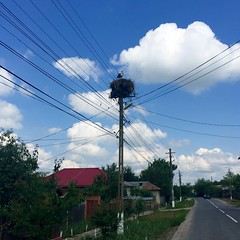 Storks' nests were extremely common atop power poles throughout Romania