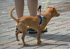 Dog Rider (swong95765) Tags: dog cute girl animal fun bareback ride fantasy unusual rider makebelieve
