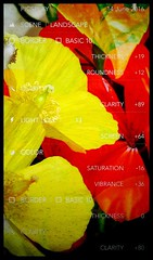 Just figuring how to use it... (Orchids love rainwater) Tags: flowers red orange yellow poppy raindrops citrus lime geranium threeimages picsplay