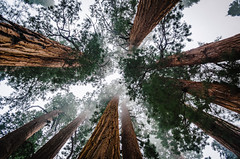The Senate (HikerDude24) Tags: california park trees mountains nature forest outdoors nationalpark hiking national sierras sierranevada sequoia sequoianationalpark giantsequoias giantforest congresstrail