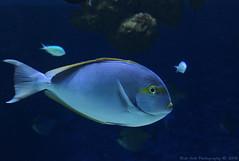 Fish @ Den Bl Planet (Rick & Bart) Tags: fish canon copenhagen denmark kbenhavn rickbart denblplanet rickvink eos70d nationalaquariumdenmark