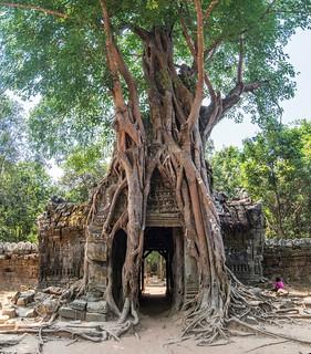 angkor - cambodge 2016 38