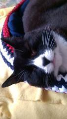 Zzzzzzzzzzz (KT-wu) Tags: cat kitty peaceful snooze tuxedocat sleepingbeauty blackandwhitecat