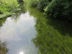 UK - Buckinghamshire - Denham - Stream in Denham Country Park (JulesFoto) Tags: uk england clog centrallondonoutdoorgroup buckinghamshire denham denhamcountrypark stream