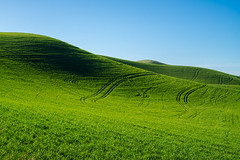 Palouse wheat fields in spring, green fields. (Earl Robicheaux Photography, LLC) Tags: usa daylight washington spring scenery seasons wheat unitedstatesofamerica grain land northamerica wa crops prairie agriculture grassland colfax springtime wheatfields palouse springgreen agronomy whitmancounty worldregionscountries croplands agriculturallands pastureland grainfields
