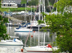 176 of 366 (I line photography) Tags: 365project sailingboats water yachtmasts trees