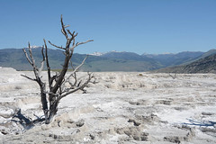 "Mammoth Hot Springs • <a style=""font-size:0.8em;"" href=""http://www.flickr.com/photos/75865141@N03/27619177096/"" target=""_blank"">View on Flickr</a>"