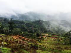 Arecibo, PR (Eugene Rapp) Tags: arecibo nature green landscape photo photography picture puertorico fog forest usa travel tiltshift beautiful bestphoto caribbean canon canon70d