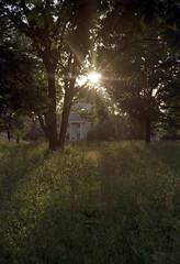 Sun rays (suxarik) Tags: light sun color film nature gold diy nikon warm ray dof kodak bokeh rangefinder scanned nikkor expired shining rotary rf s2 selfdeveloped c41 kodakgold200 jobo nikons2 cpe2 minoltadimagescan