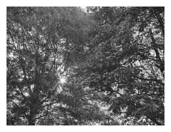 (Gene Daly) Tags: newyorkcity blackwhite genedaly hoyahmcwideauto24mmf28 olympusem5 p6240005