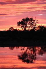 Sunrise (Arthur Chapman) Tags: sunrise australia outback southaustralia outbackaustralia lakeeyre geo:country=australia muloorina geocode:method=gps geocode:accuracy=100meters muloorinastation