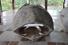 Carapace (Ryan Hadley) Tags: carapace galapagostortoise galpagostortoise tortoise animals wildlife elchatotortoisereserve santacruzisland islasantacruz galapagos galapagosislands galpagos galpagosislands ecuador southamerica nationalpark worldheritagesite nature