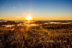 20160828-IMG_7756-WM (Pamela McLellan Zmija) Tags: pamelamclellanzmija saugeenshores portelgin sunset beach lakehuron goblesgrove sunshine