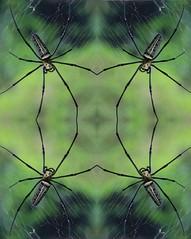 Spinnen-Netz (harleyxxl) Tags: spinne netz symmetrie thailand