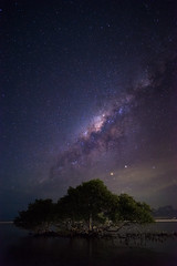 Window to Space (Vincent Fn) Tags: nightsky night astrophotography milkyway galaxy tree trees water stars bali indonesia landscape seascape nightscape