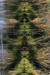 20160826_ZambeziReflectionsPortraits_MCM (mcmessner) Tags: africa bjadventures grass morning morningboatride reflection rorschak southafrica2016 sunrise tongabezilodge water zambeziriver zambia livinstone