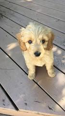 Liesel & Nolan's little boy Leo!