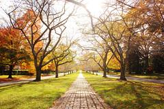 Autumn in Windsor Farms