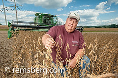 Farmer checking soybeans in Laytonsville, Maryland, USA (Remsberg Photos) Tags: usa man field farm inspection harvest maryland crop combine ag farmer soybean agriculture harvesting laytonsville