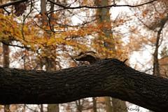 Awake (Andrew 62) Tags: tree nature bark charnwoodforest