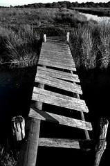 IMGP4620 (sophiri) Tags: pont marais bois brire