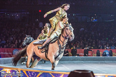 11-8-2014 at Ringling Bros Circus in Chicago, Illinois - Allstate Arena (RickDrew) Tags: nov november horse chicago canon illinois circus rosemont il entertainment bailey 5d act equine acts barnum 2014 ringlingbros mkiii
