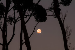 Early Morning Moon (thestern18) Tags: ocean trees moon beach nature sunrise canon photography australia nsw 7d newsouthwales 24105 lseries canon24105 canon7d denhamsbeach