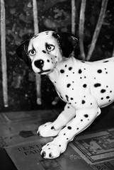 spot (IndyEnigma) Tags: dog ceramic dof indiana dalmation d200 tangerinetambourine