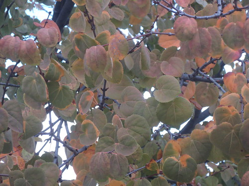 秋を迎える