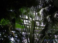The greenhouse of Bucharest Botanical Garden (cod_gabriel) Tags: greenhouse romania jardimbotnico botanicalgarden bucharest hortusbotanicus bucuresti rumania romenia sera romnia bukarest roumanie jardnbotnico  ortobotanico boekarest bucarest romnia botanischergarten  romanya rumnien roemeni rumnien  rumana romnia bucureti  bucharestbotanicalgarden rumunia ogrdbotaniczny  romnia botanisktrdgrd botanikbahesi  bucareste     rumunjska      grdinbotanic grdinabotanicbucureti  ser kebunbotani