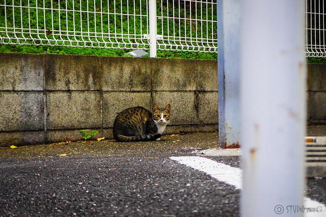 Today's Cat@2014-11-30