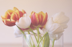 In Bloom (flashfix) Tags: flowers stilllife orange white ontario canada texture nature floral rose yellow 50mm nikon soft tulips ottawa vase highkey mothernature pinks 2014 intentionalgrain d7000 nikond7000 2014inphotos november082014