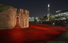 Poppies (SarahO44) Tags: world uk london tower tom night canon ceramic paul blood war united first kingdom poppy poppies piper swept moat shard cummins seas outbreak 6d