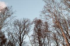 Sky & Trees (abysal_guardian) Tags: trees sky canon eos l ef f4 24105mm ef24105mmf4lisusm 7dmarkii 7dm2