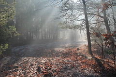 Warszawa Wesoła, Mazowsze, Poland (LeszekZadlo) Tags: wood las autumn trees naturaleza sunlight mist fall nature fog forest landscape europe natureza eu poland polska paisaje landschaft wald polonia ue pologne mazowsze mazovia pejzaż